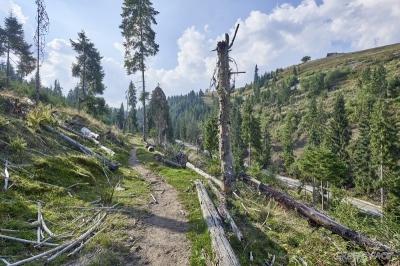 Apel către Președinției și CSAT în scandalul Inspectorul Pădurilor