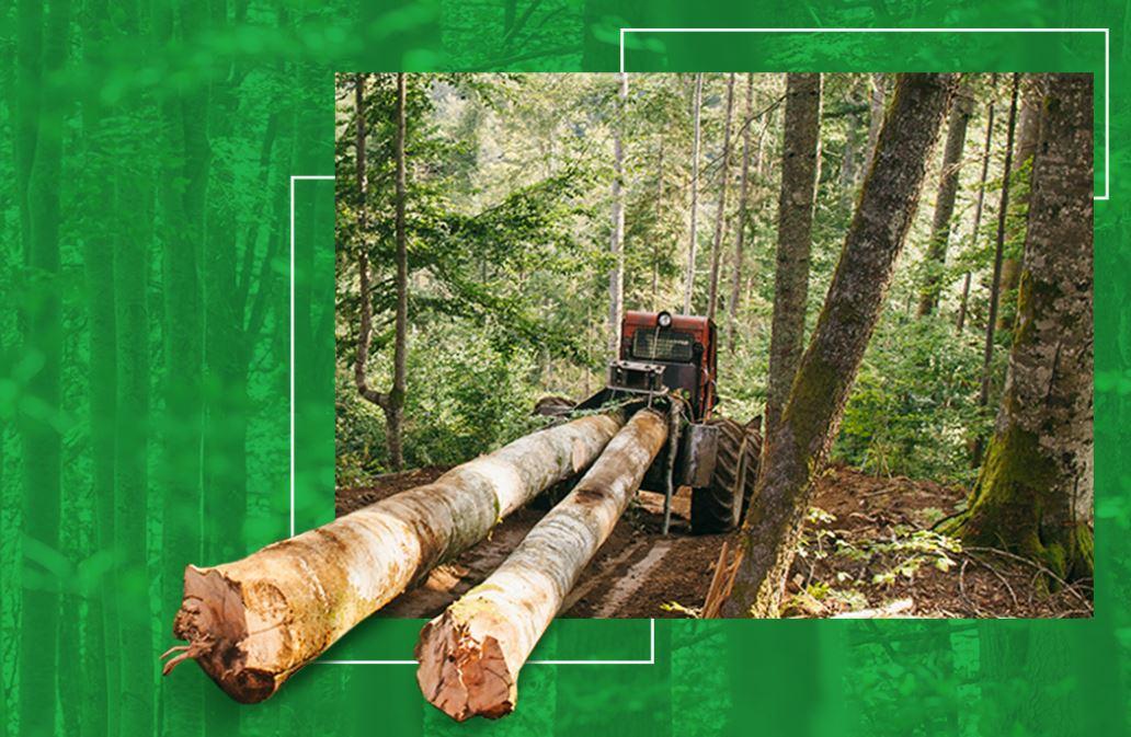 Uncut.ro - să devenim responsabili față de situația pădurilor virgine