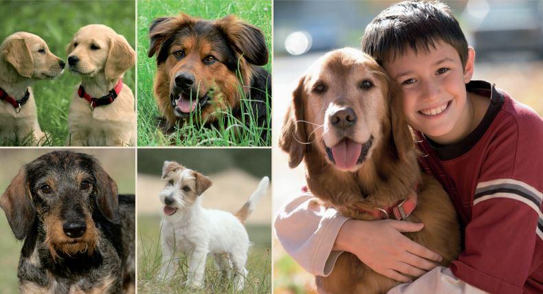 Programul care îi învaţă pe elevi cum să interacţioneze cu animalele de companie