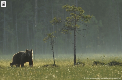 Ariile naturale protejate din România rămân neprotejate: custozii
