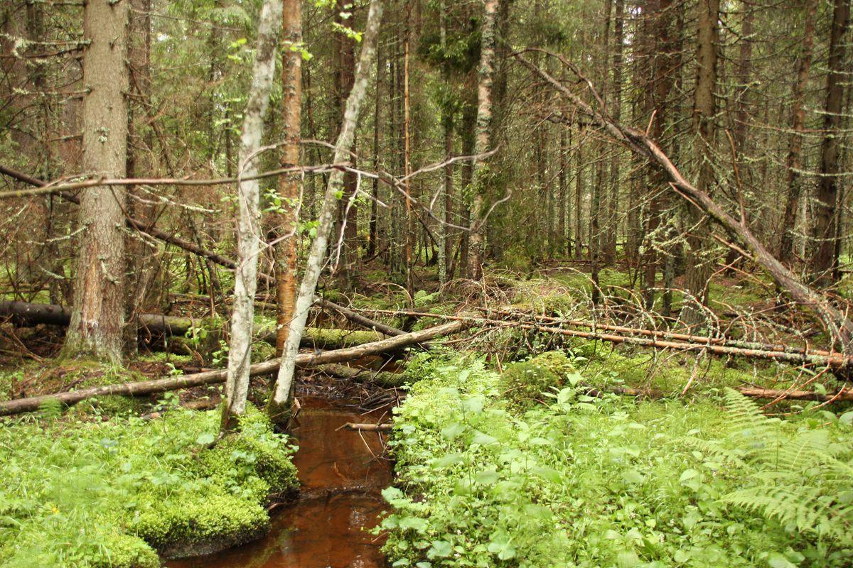ONG-urile de mediu din Harghita: Natura va avea enorm de suferit