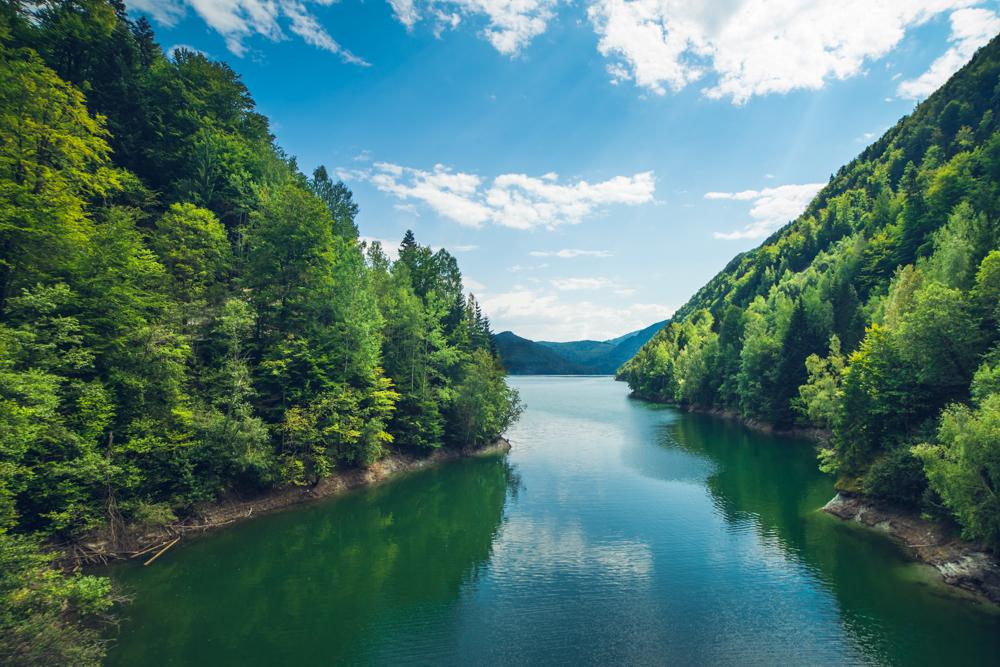 Greenpeace România lansează Forest Guardians