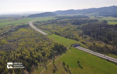 Până acum au murit 3 urși pe autostrada A1