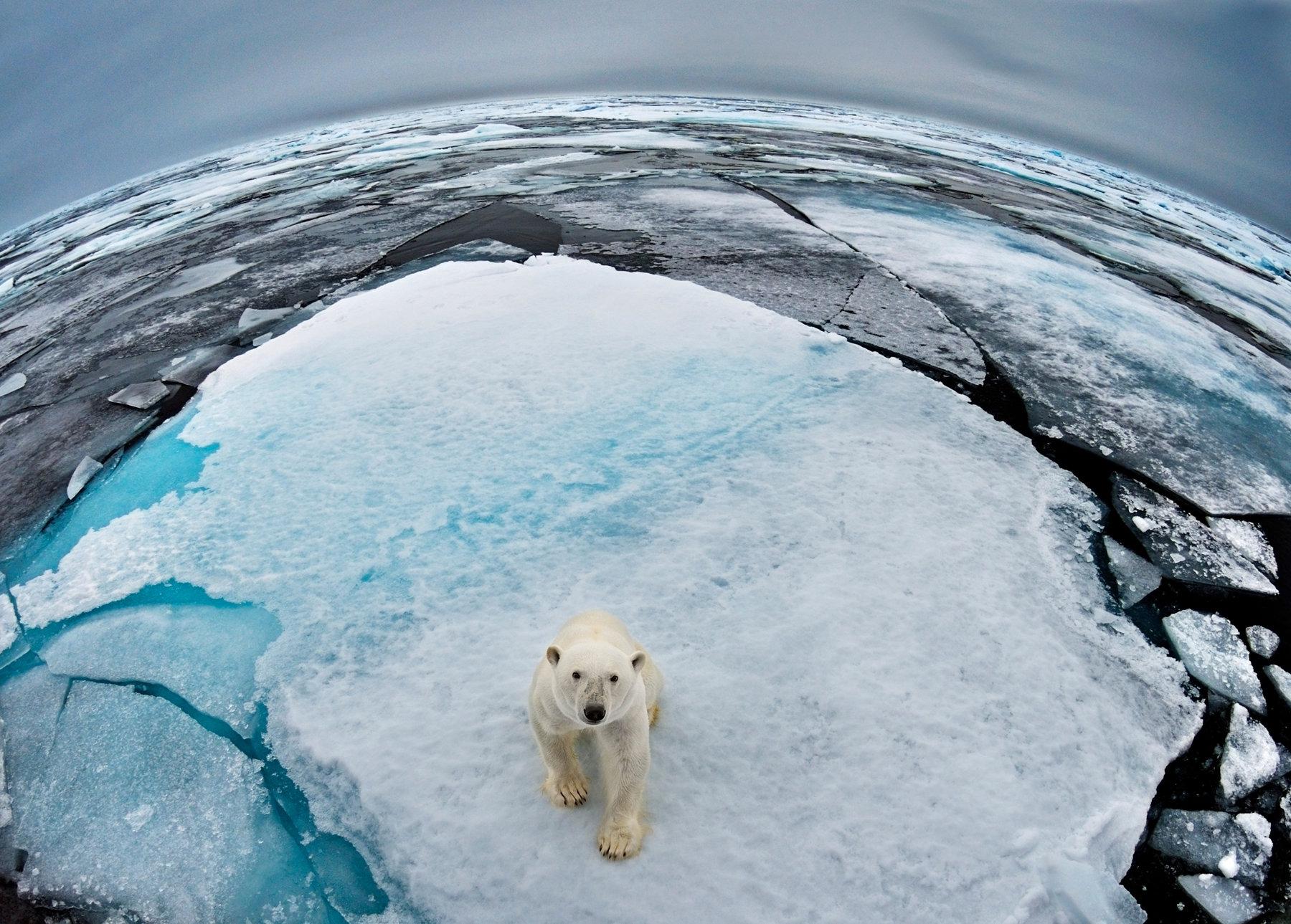 Raportul Planeta Vie 2018 al WWF dezvăluie amploarea impactului omenirii asupra Pământului