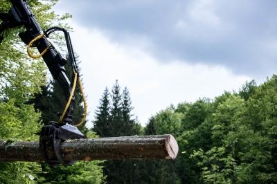 WWF-România lansează o nouă versiune a platformei online Lemn Controlat