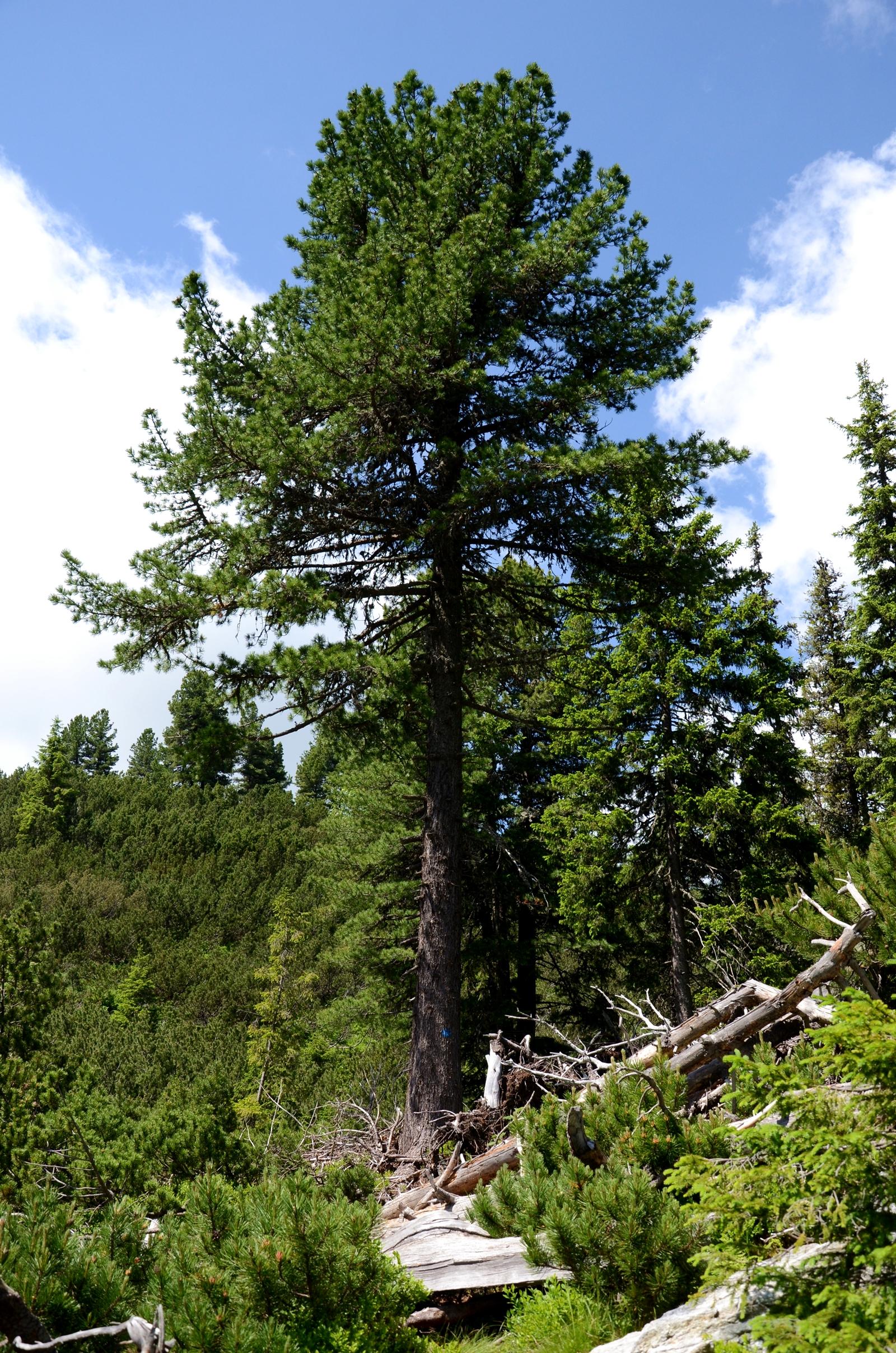 Riscăm să pierdem 500.000 de hectare de pădure!