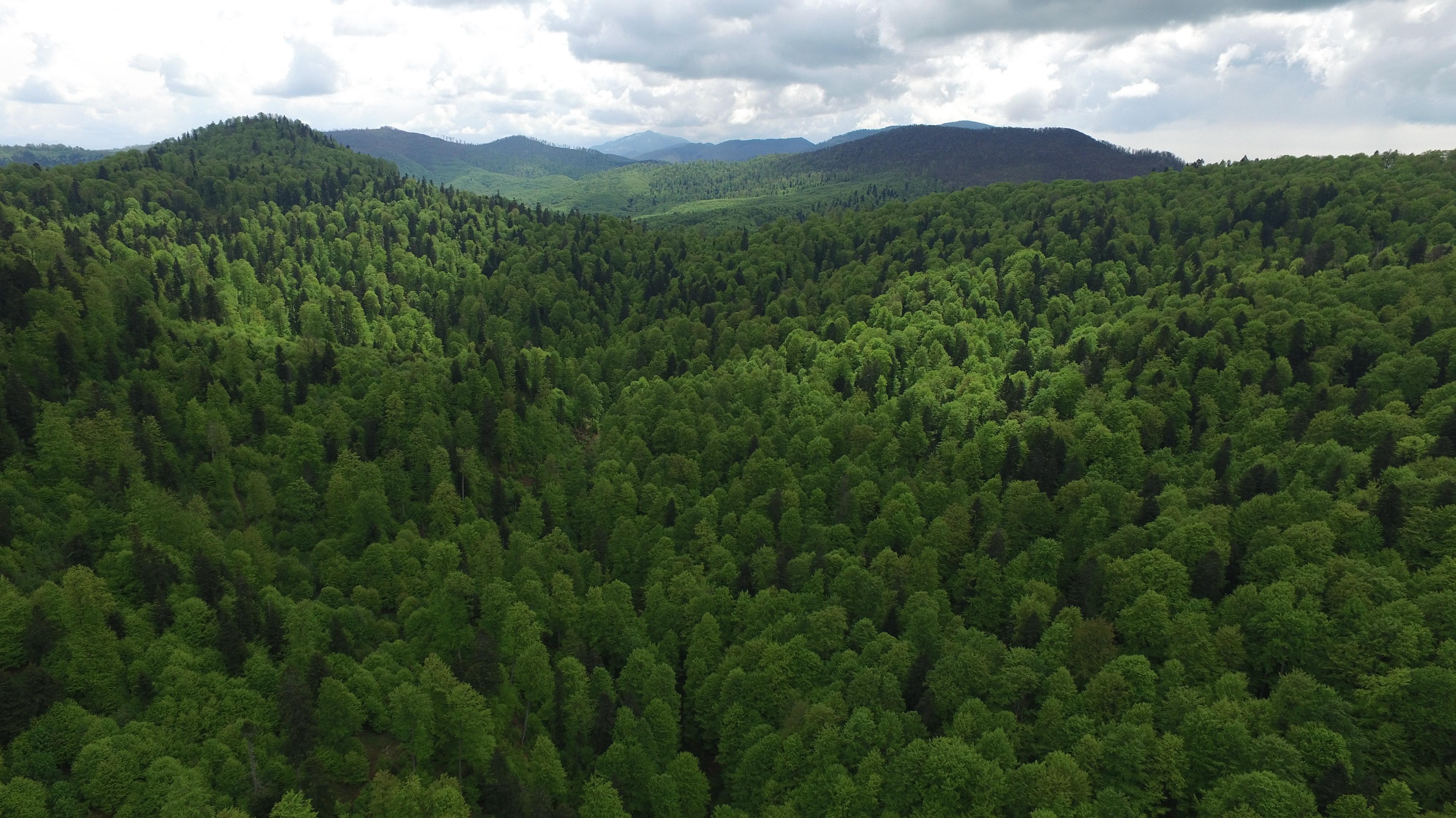 Lupta pentru protejarea pădurii și a biodiversității din România are din acest an un nou aliat - Standardul Național FSC®