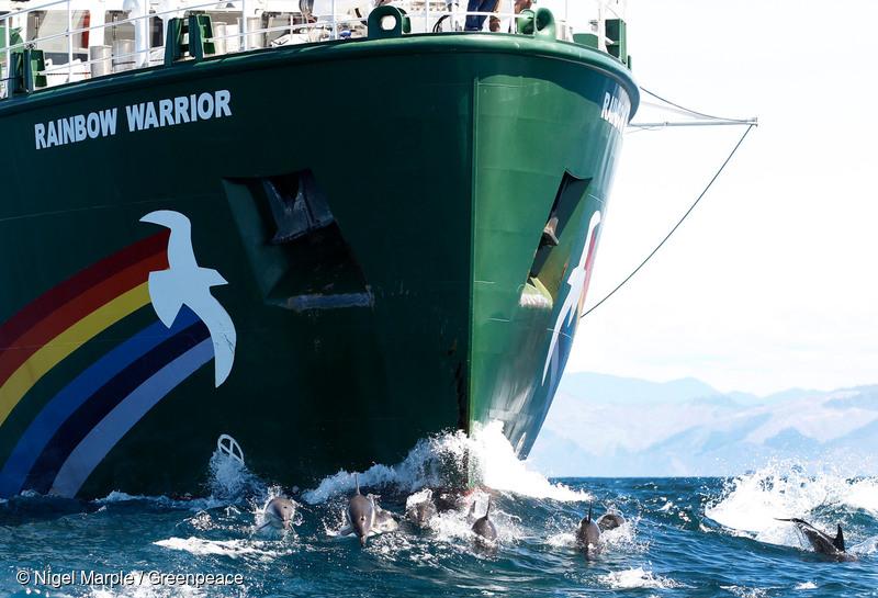 Rainbow Warrior, nava-fanion a Greenpeace, vine în România