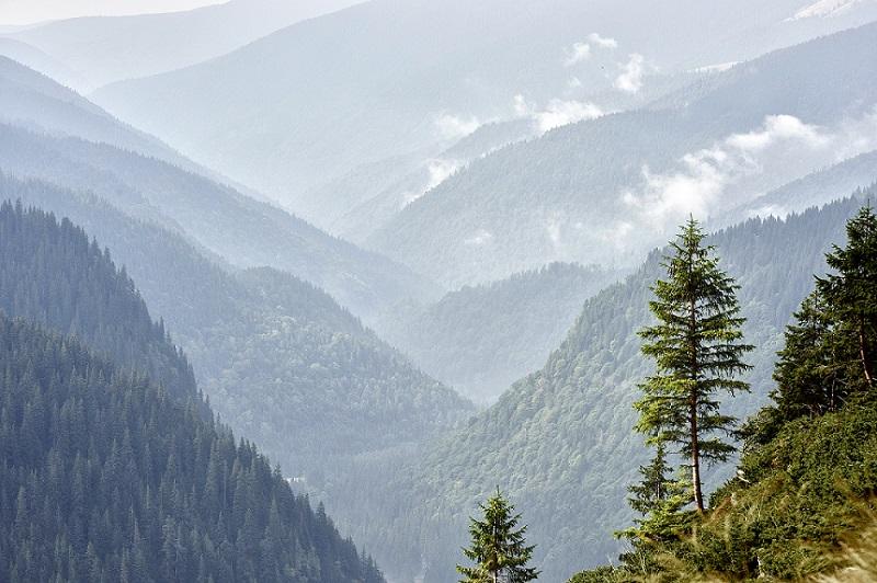 Petiţie  SOS pădurile României: stopați jaful!