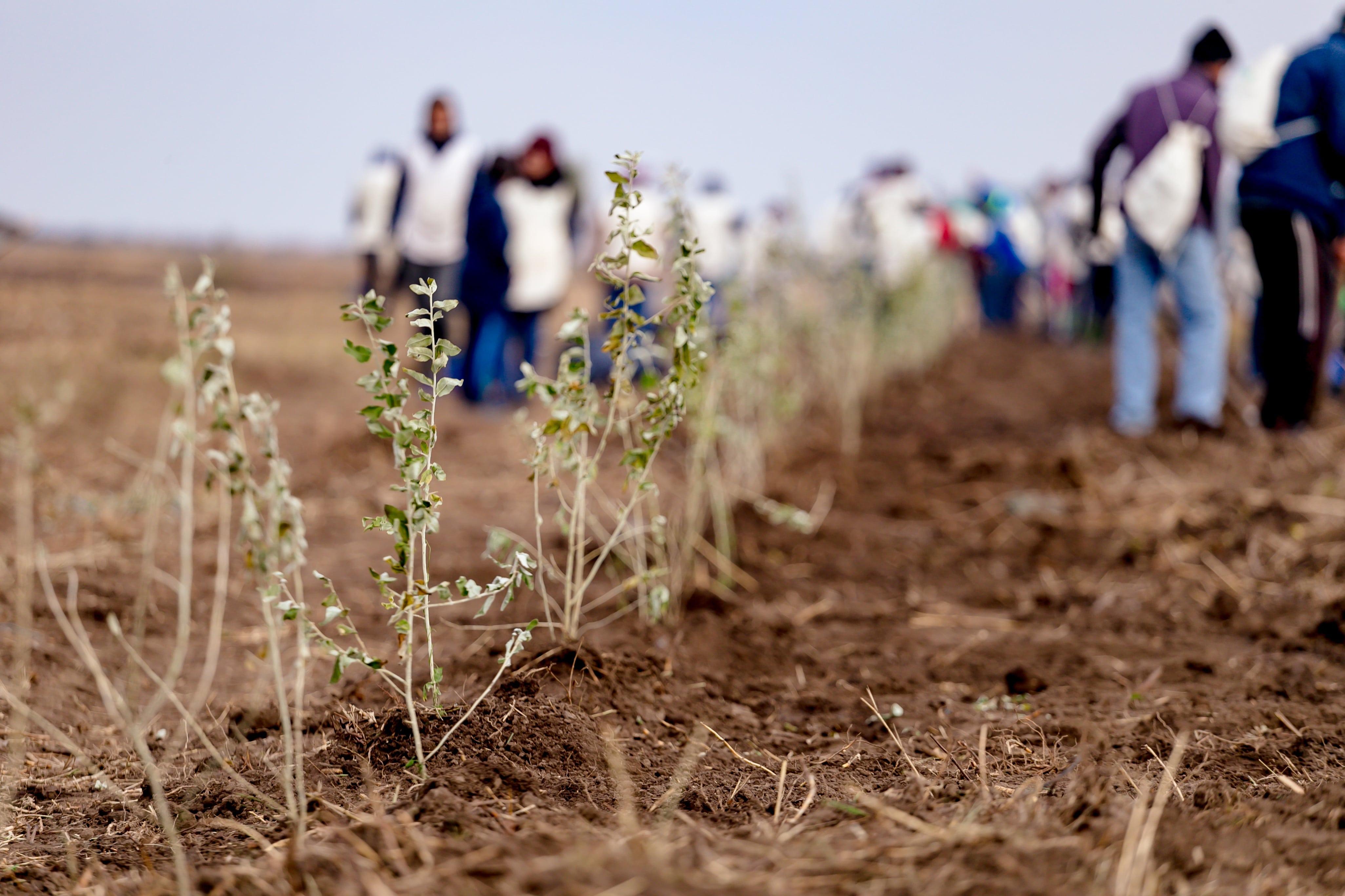 """21.000 de puieți plantați toamna aceasta de ViitorPlus, prin proiectul """"Adoptă un copac!�"""