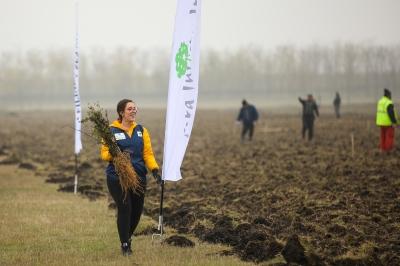 71.000  de copaci au fost plantați în aceasta toamnă