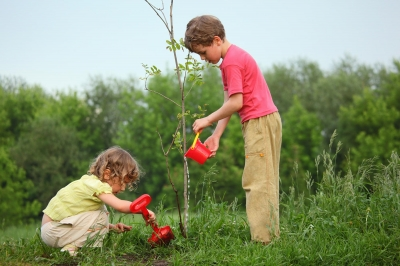 """Au început înscrierile pentru Programul Național de plantat păduri """"Pădurea Mea"""" ediția 2020"""
