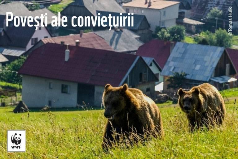VIDEO. În România, conviețuirea dintre oameni și carnivorele mari este posibilă