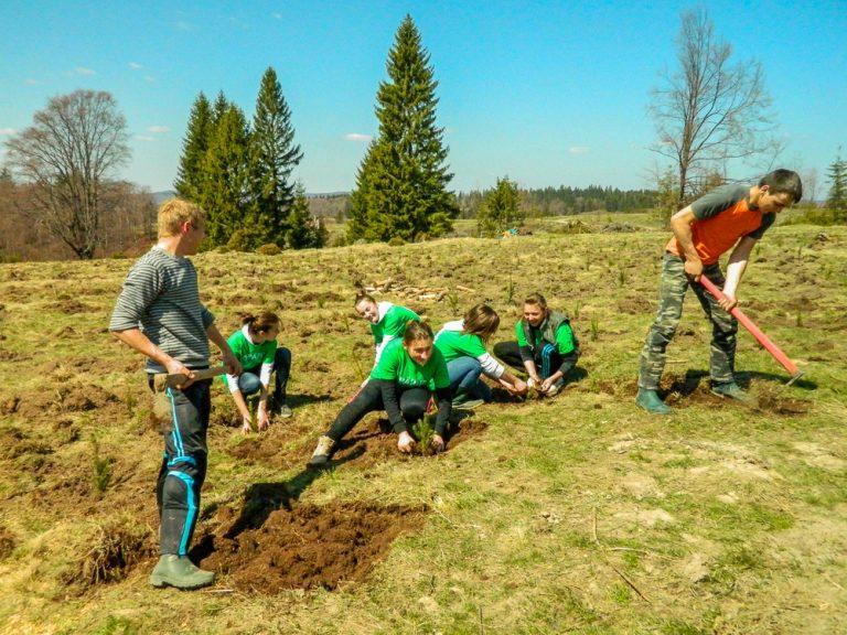 """Fundația Mihai Eminescu Trust va ajunge în 2020 la 2.500.000 de puieți plantați în cadrul proiectului """"Plantăm pentru viitor�"""