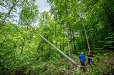 WWF propune soluțiile care ar scăpa România de infringementul pe păduri