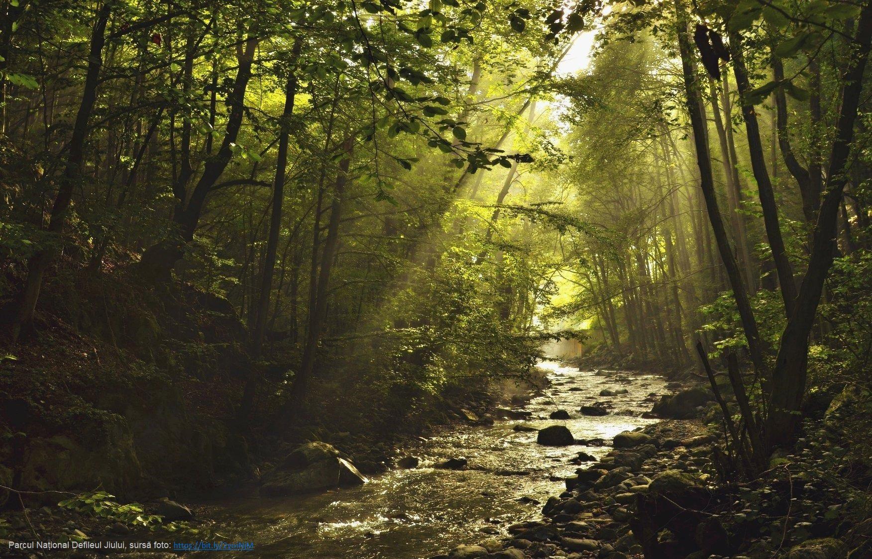 Noua strategie a Comisiei Europene în domeniul biodiversității are nevoie de un buget și o legislație pe măsură