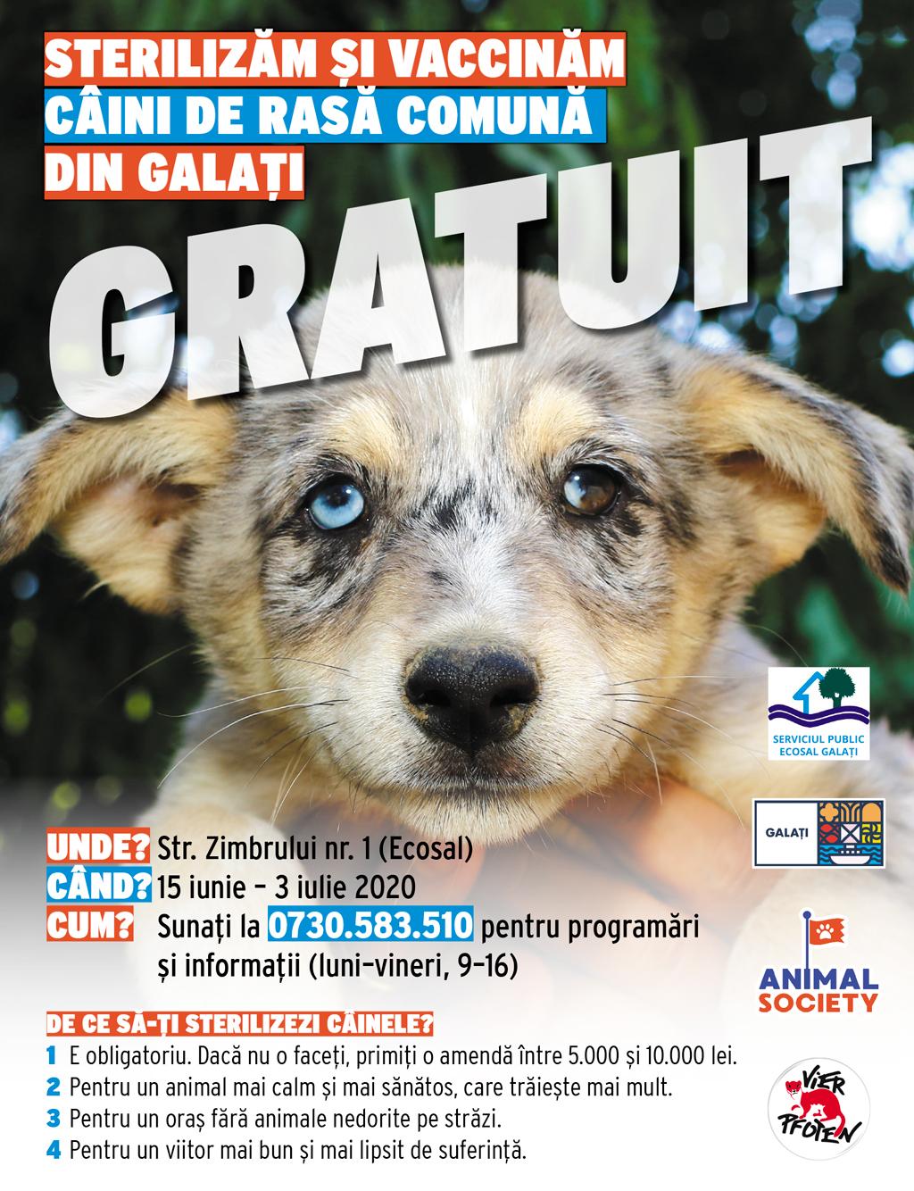 Animal Society reia campania de sterilizare gratuită a câinilor de rasă comună din Galați