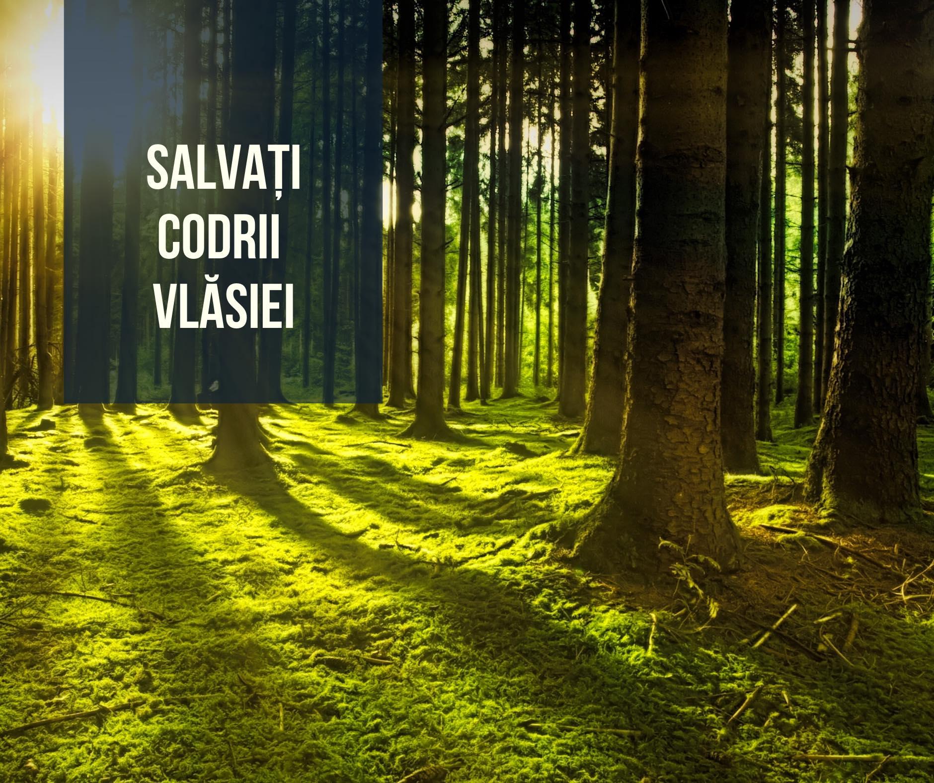 S-a înființat grupul civic Salvați Codrii Vlăsiei