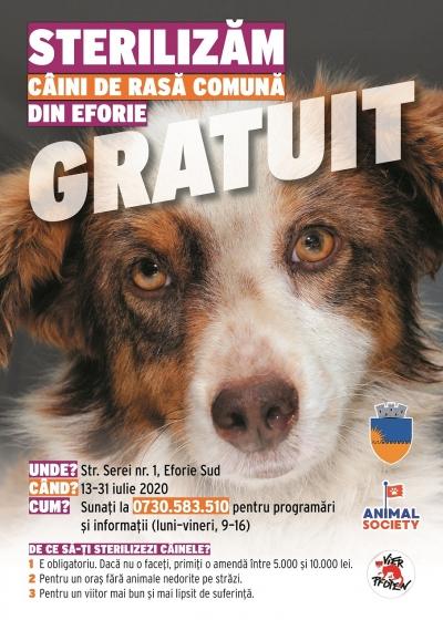 Animal Society demarează o campanie de sterilizare gratuită a câinilor de rasă comună din Eforie