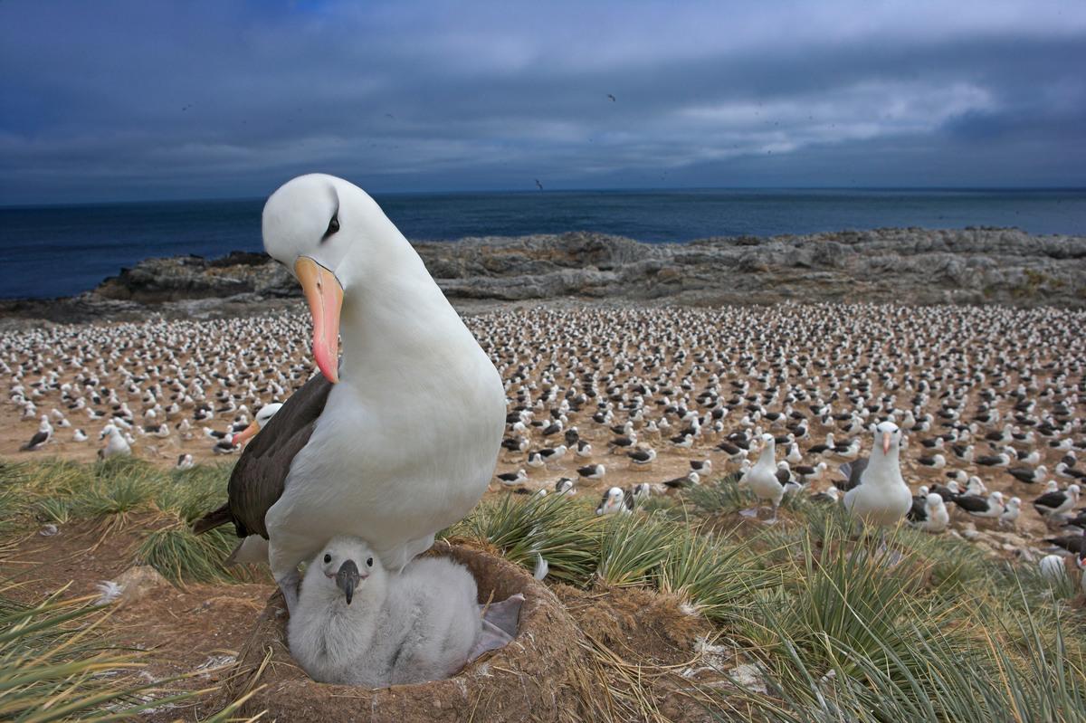Raportul WWF Planeta Vie demonstrează starea de degradare a naturii: Am pierdut 68% din populațiile de vertebrate din fauna sălbatică, în medie, din 1970