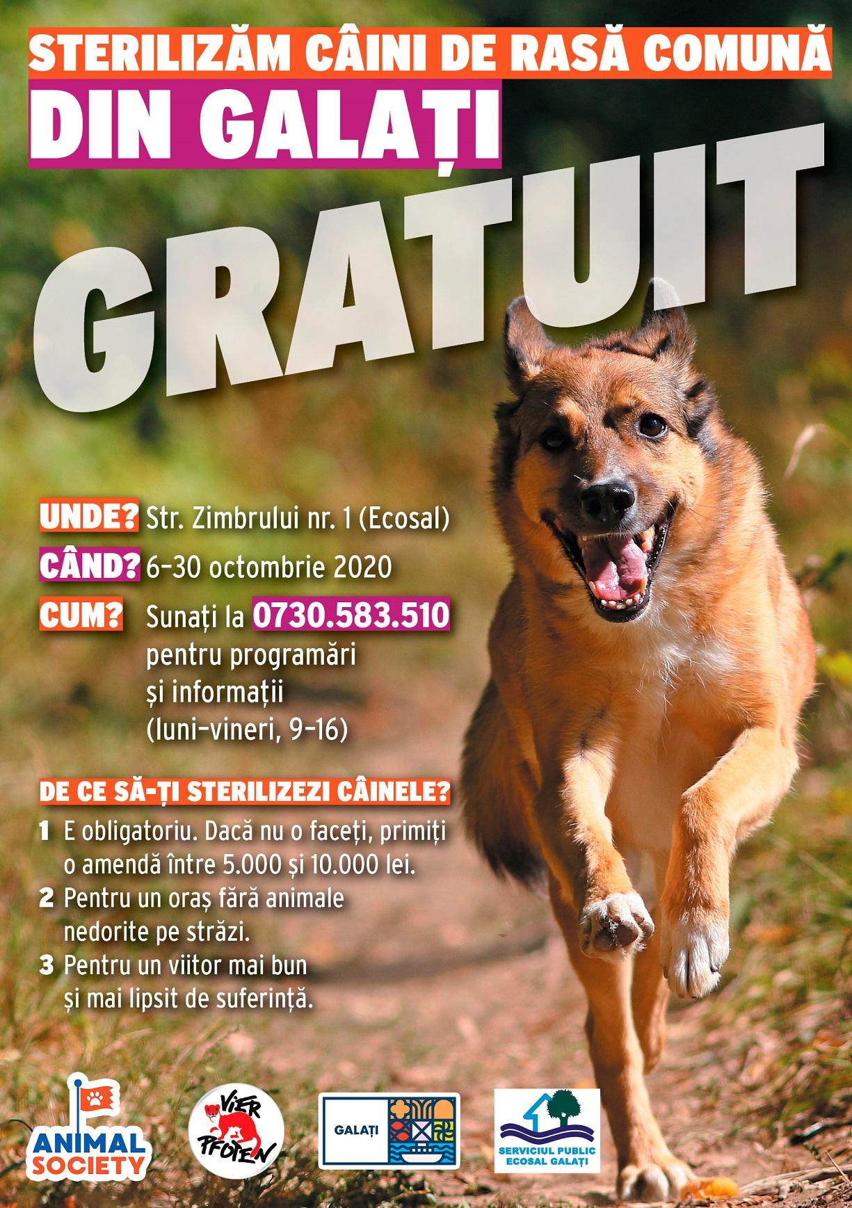 Animal Society reia sterilizarea gratuită a câinilor de rasă comună în cadrul proiectului-pilot de la Galați