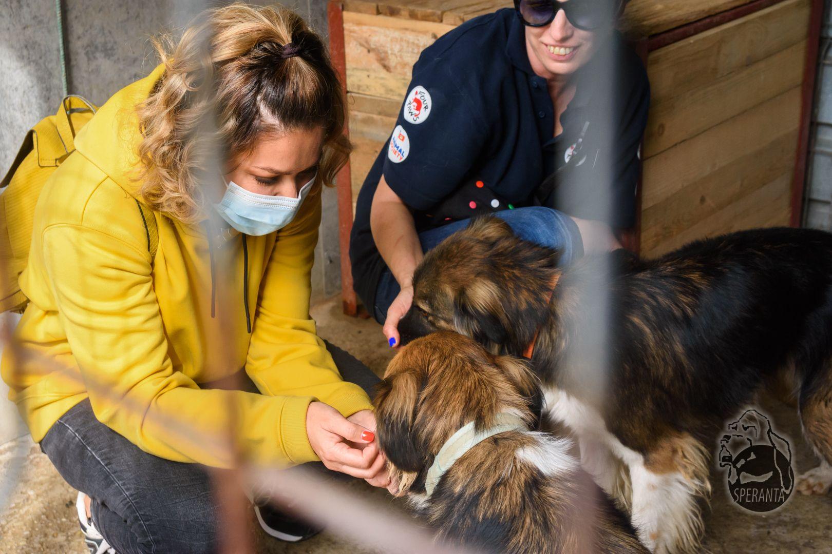 Vedetele s-au alăturat campaniei de adopție lansate de Animal Society de Ziua internațională a animalelor