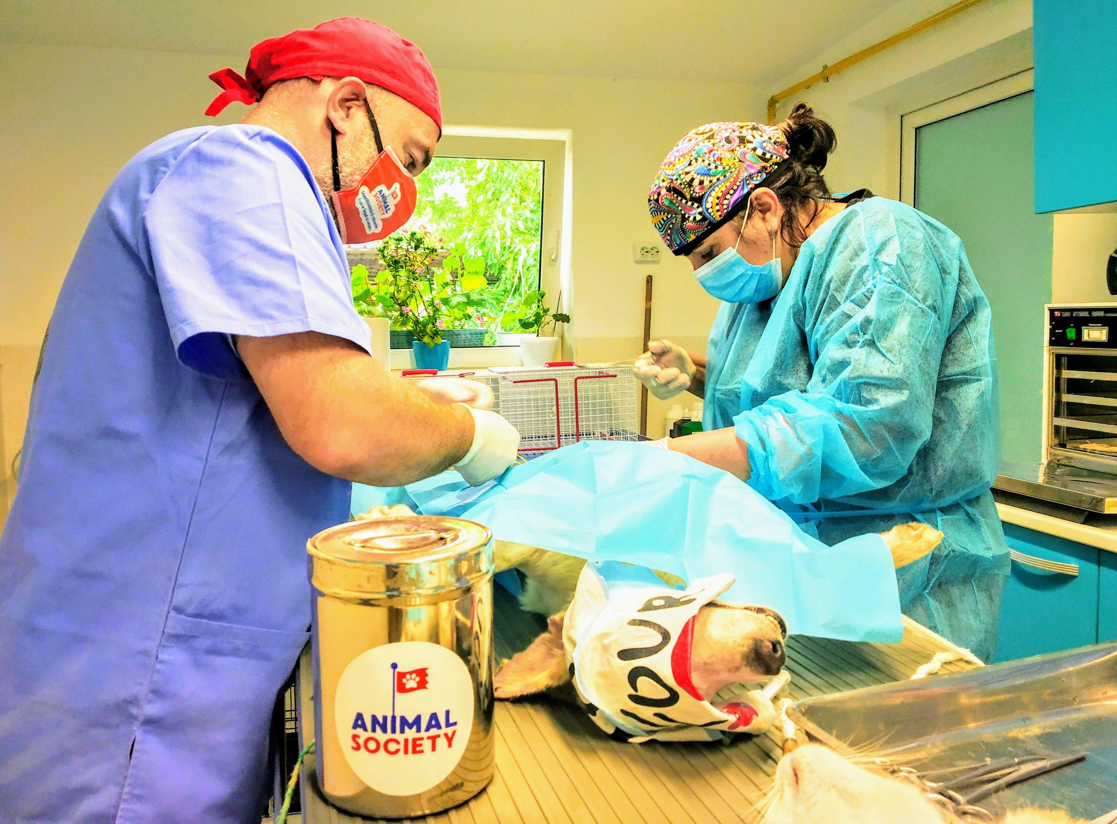 """Animal Society și Primăria Municipiului Constanța lansează proiectul """"Efort comun pentru un viitor mai bun"""""""