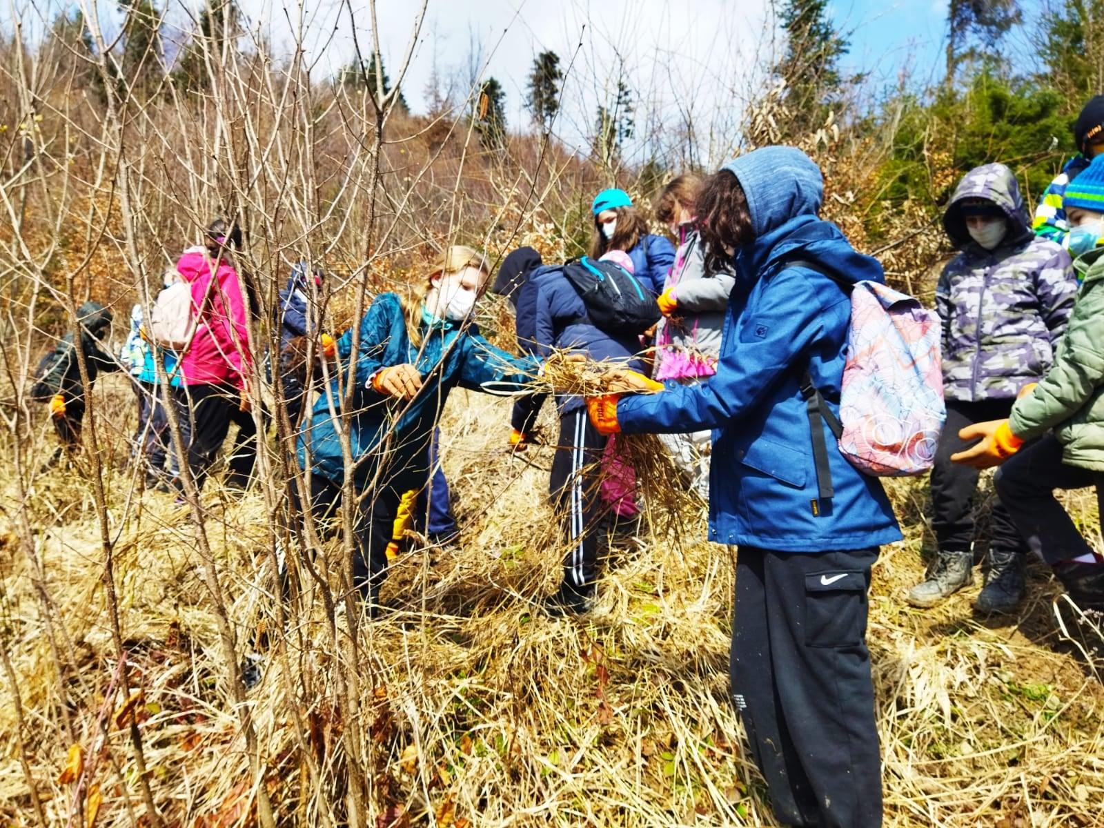 Elevii Genesis College au reîmpădurit cu puiet de brad Parcul Natural Putna-Vrancea