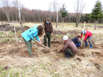 Voluntarii participă activ la refacerea și îmbunătățirea suprafețelor destinate hranei faunei sălbatice din Maramureș