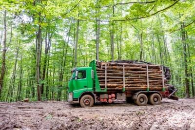 """Breșele din SUMAL 2.0 permit """"fabricarea"""" provenienței legale a lemnului"""