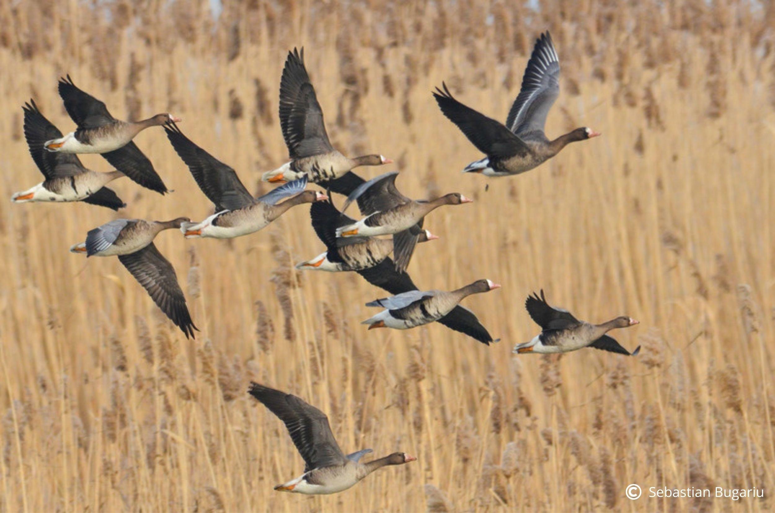 Modificările distructive aduse Legii vânătorii, la un pas de adoptare. Senatul a încălcat procedurile legale