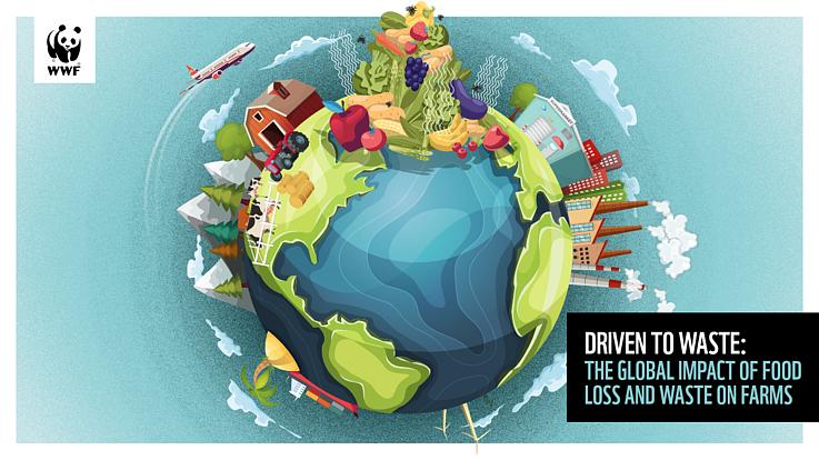 2,5 miliarde de tone de alimente sunt risipite anual, în întreaga lume, aproape dublu decât era estimat până acum