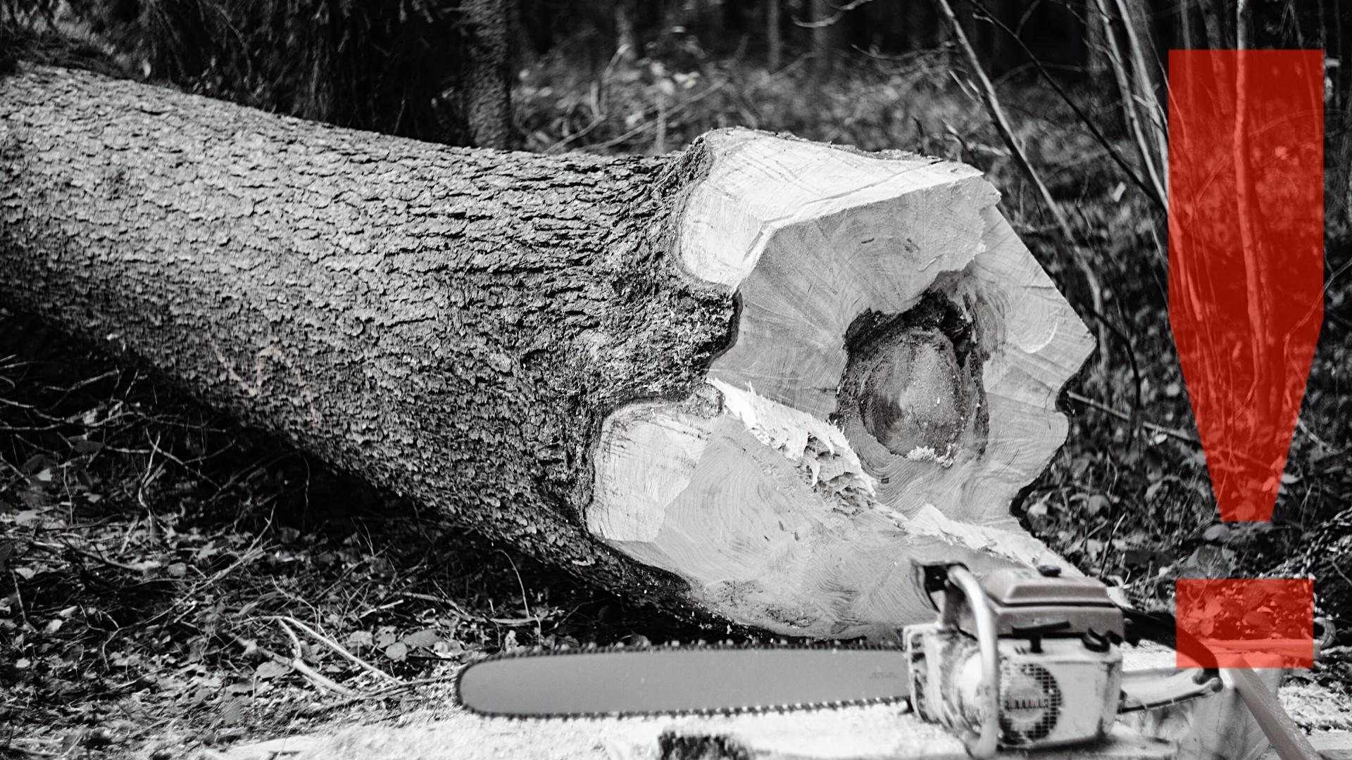 Încă un eșec al statului român – Tăierile ilegale de păduri fac noi victime
